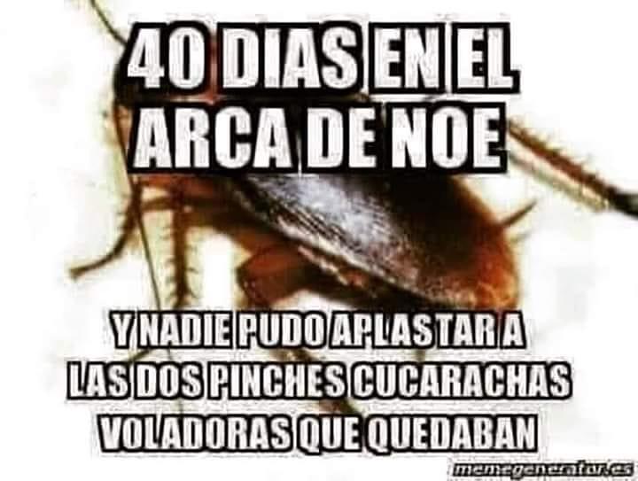 40 Días en el Arca de Noe.  Y nadie pudo aplastar a las dos pinches cucarachas voladoras que quedaban.