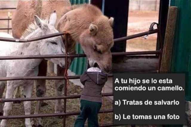 A tu hijo se lo esta comiendo un camello.  a) Tratas de salvarlo.  b) Le tomas una foto.