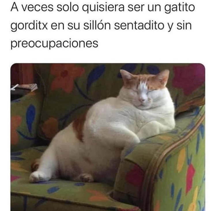 A veces solo quisiera ser un gatito gorditx en su sillón sentadito y sin preocupaciones.