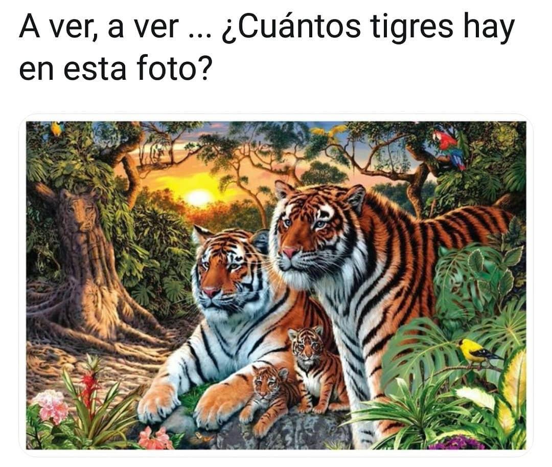 A ver, a ver... ¿Cuántos tigres hay en esta foto?