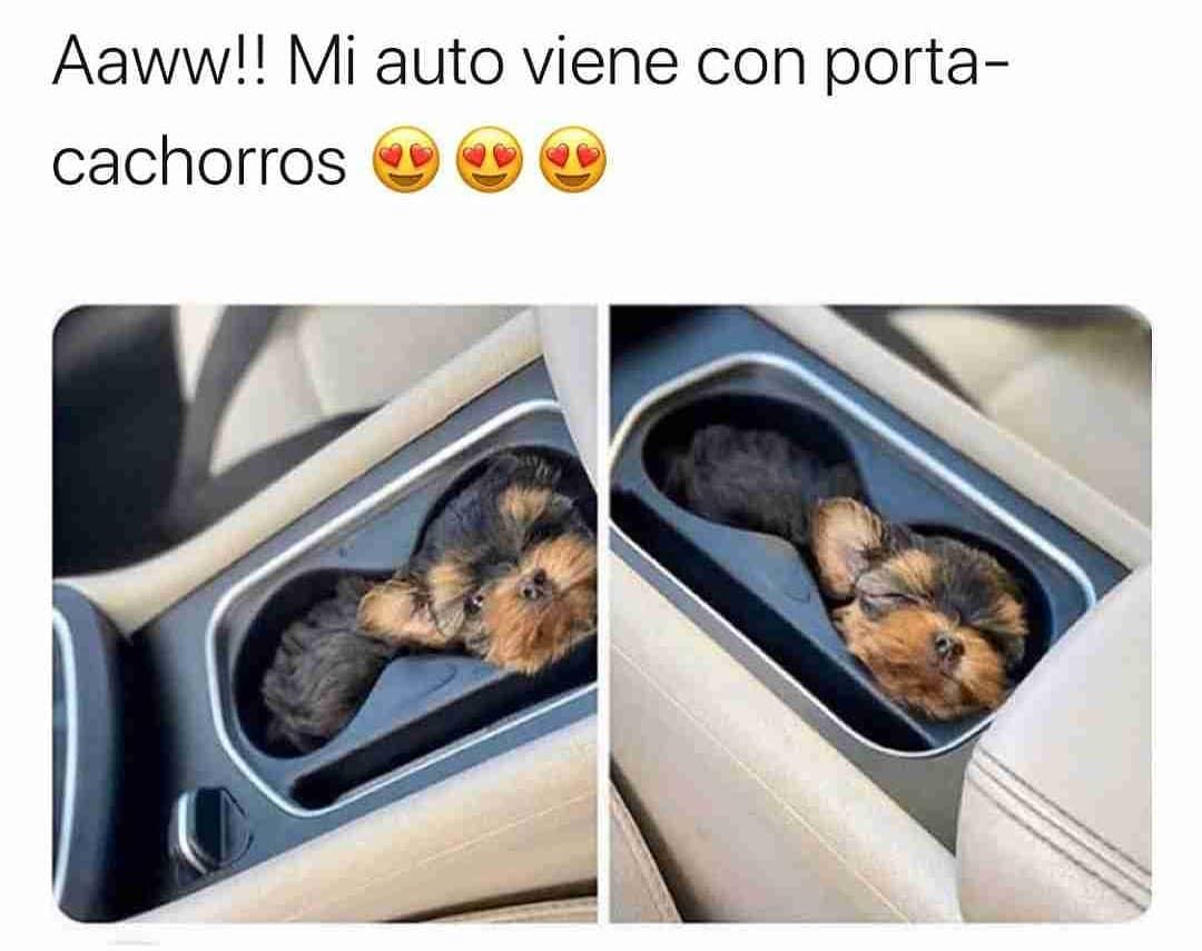 Aaww!! Mi auto viene con porta-cachorros.