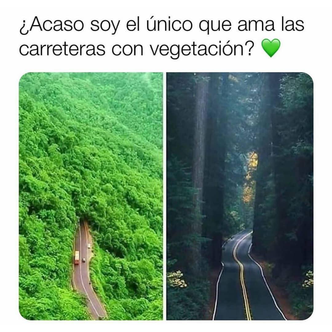 ¿Acaso soy el único que ama las carreteras con vegetación?