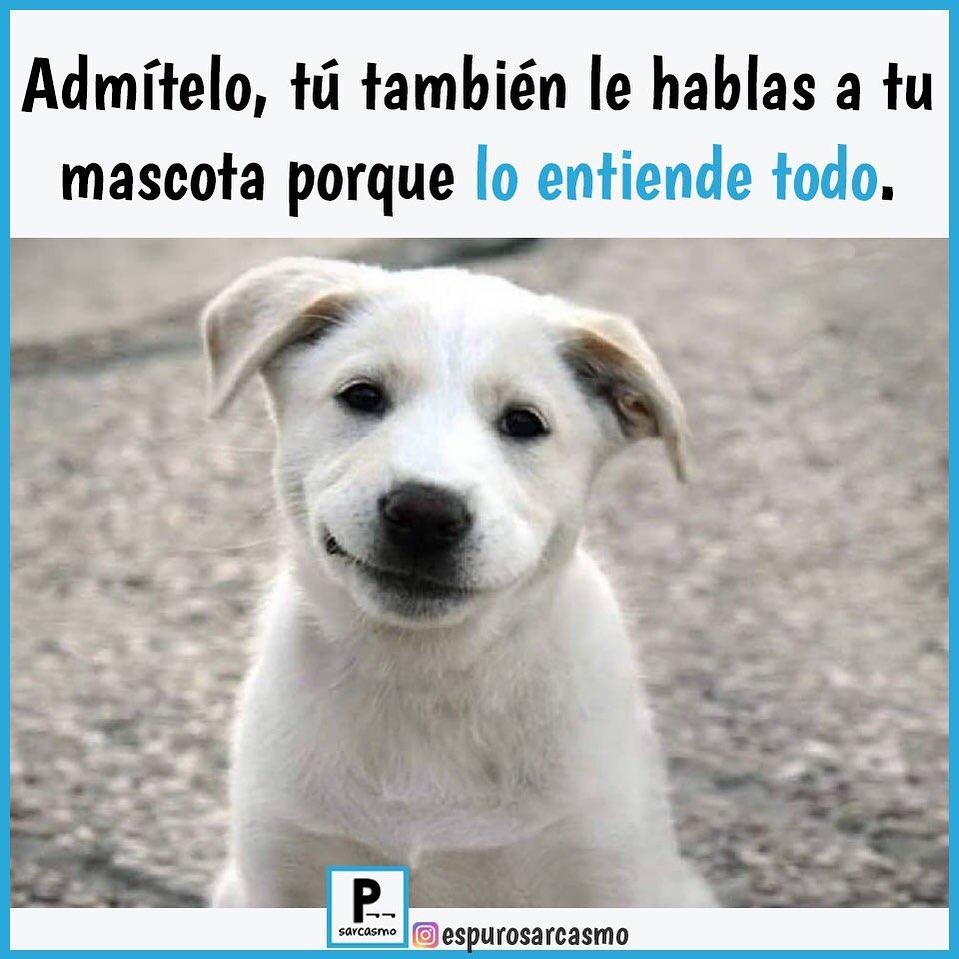 Admítelo, tú también le hablas a tu mascota porque lo entiende todo.
