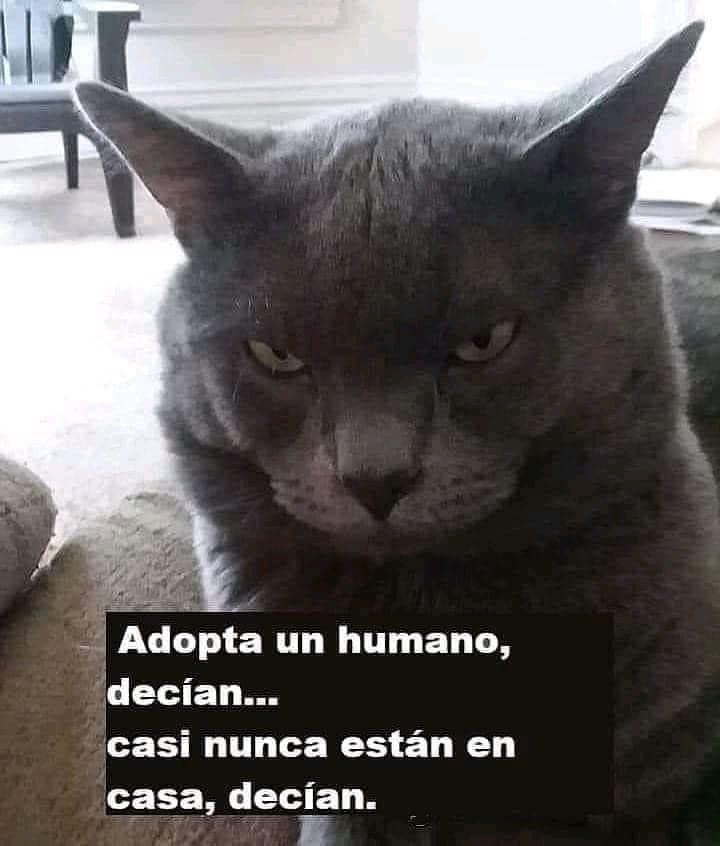 Adopta un humano, decían... casi nunca están en casa, decían.
