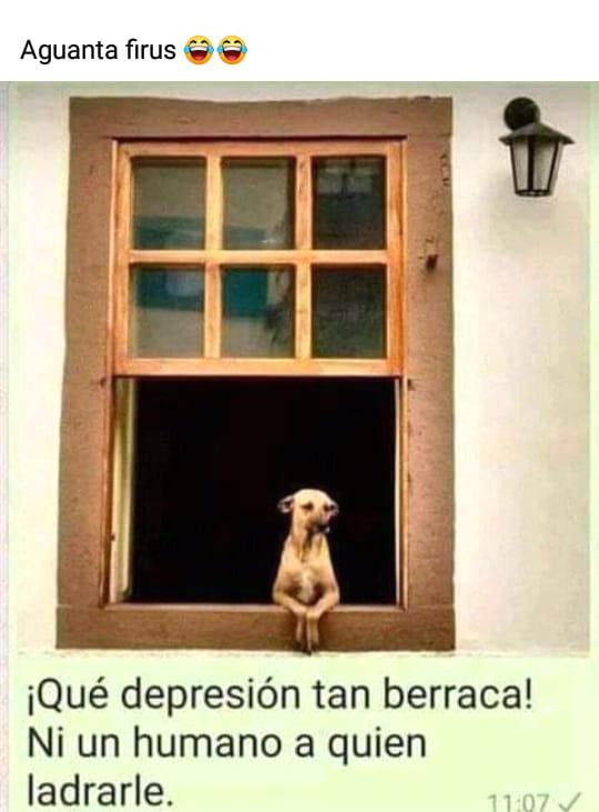 Aguanta firus  ¡Qué depresión tan berraca! Ni un humano a quien ladrarle.