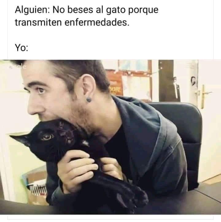 Alguien: No beses al gato porque transmiten enfermedades.  Yo: