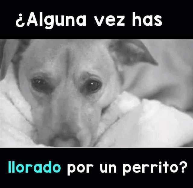 ¿Alguna vez has llorado por un perrito?