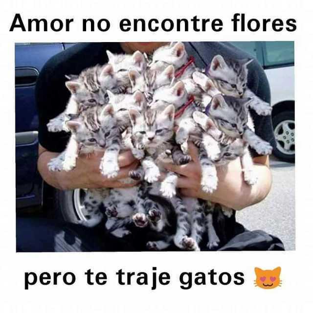 Amor no encontré flores pero te traje gatos.