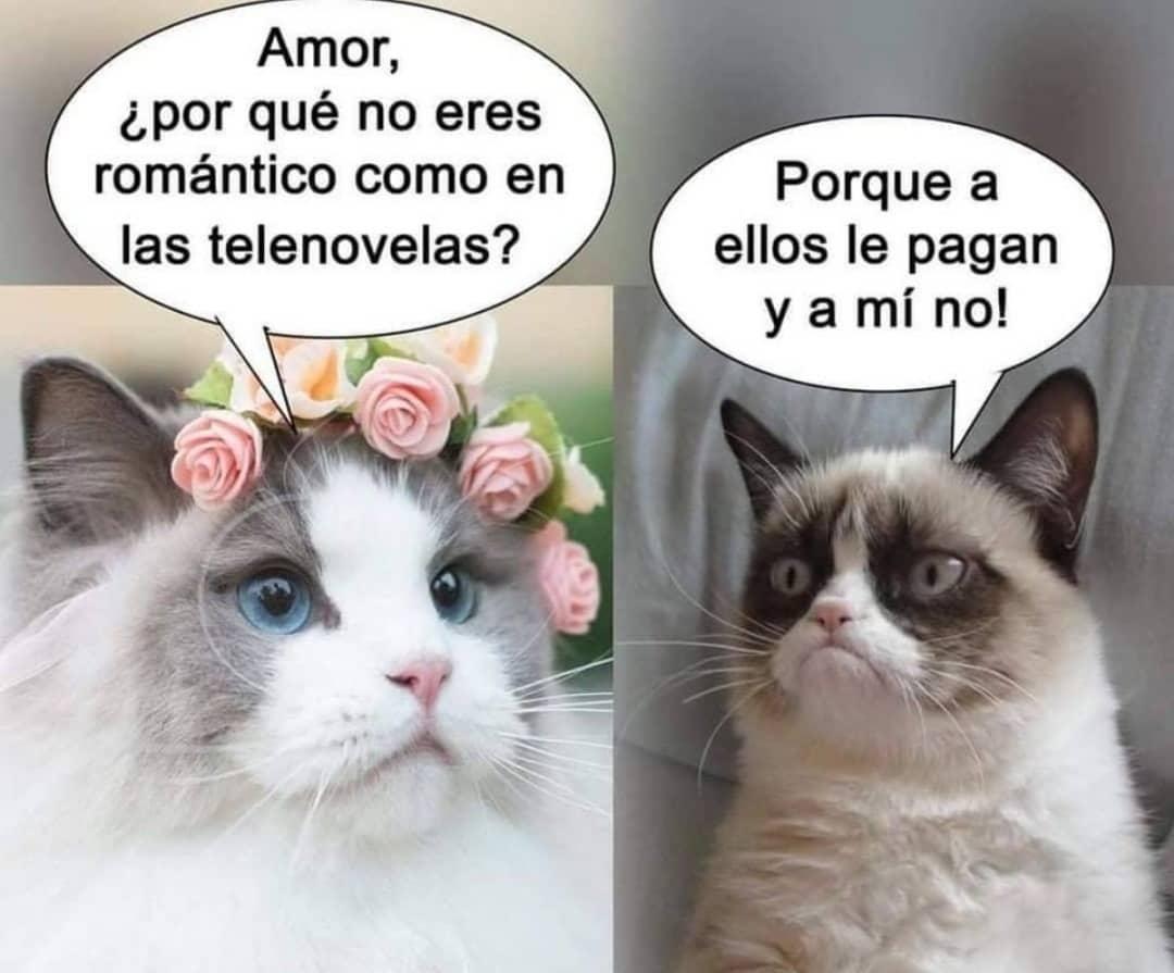 Amor, ¿por qué no eres romántico como en las telenovelas?  Porque a ellos le pagan y a mí no!