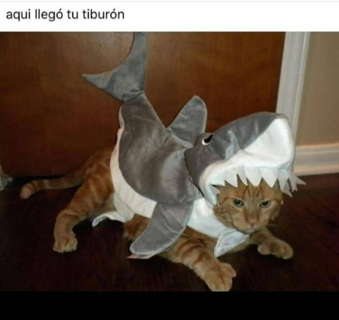 Aquí llegó tu tiburón.