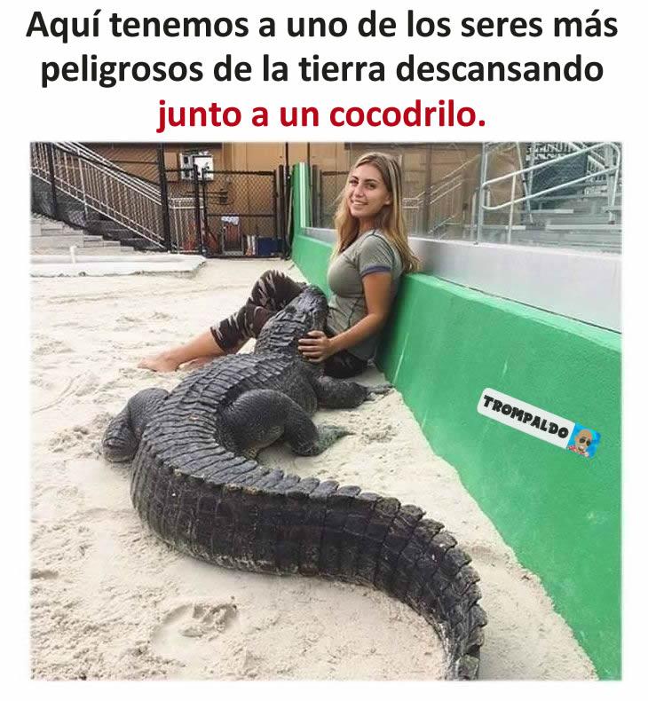 Aquí tenemos a uno de los seres más peligrosos de la tierra descansando junto a un cocodrilo.