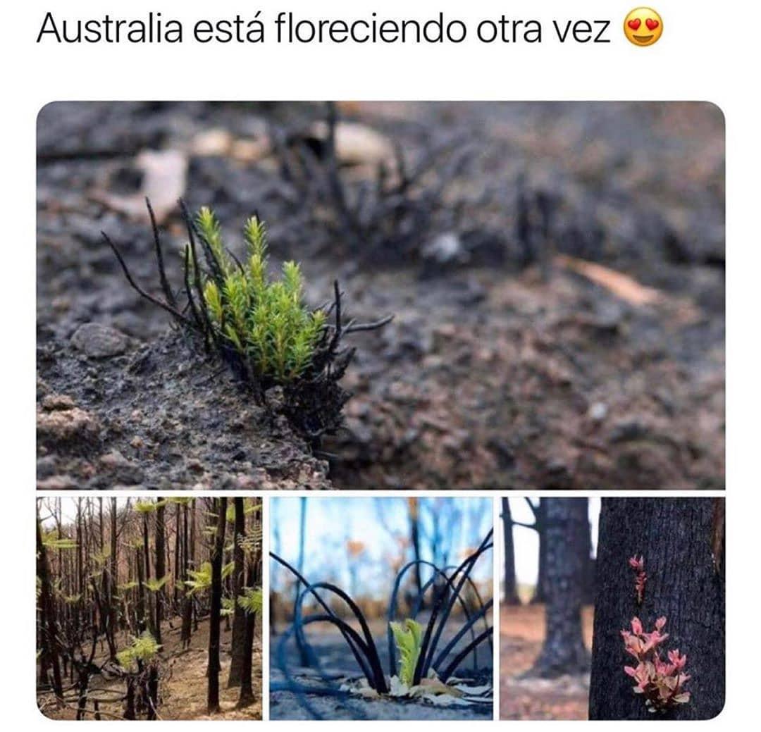 Australia está floreciendo otra vez.