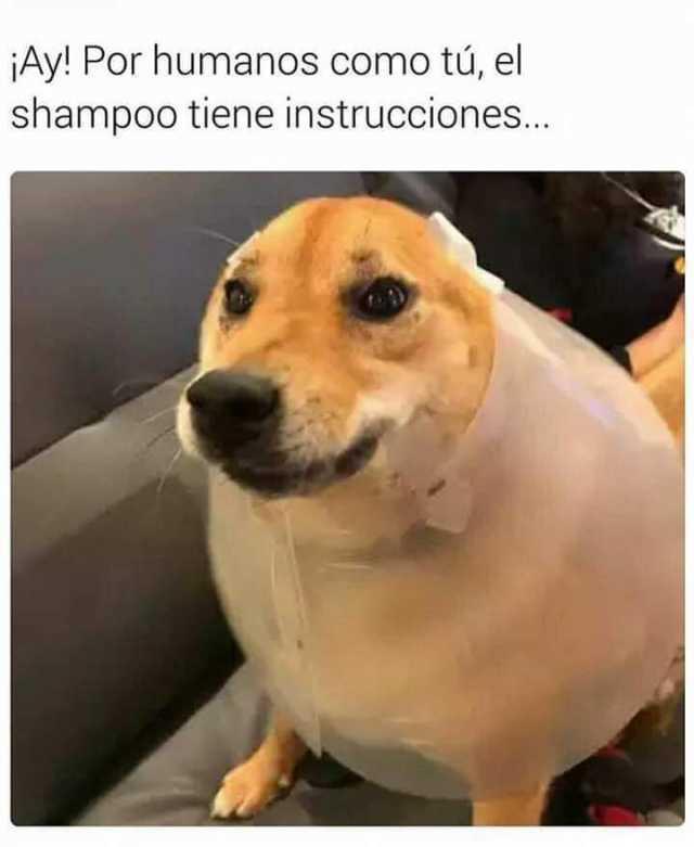¡Ay! Por humanos como tú, el shampoo tiene instrucciones...