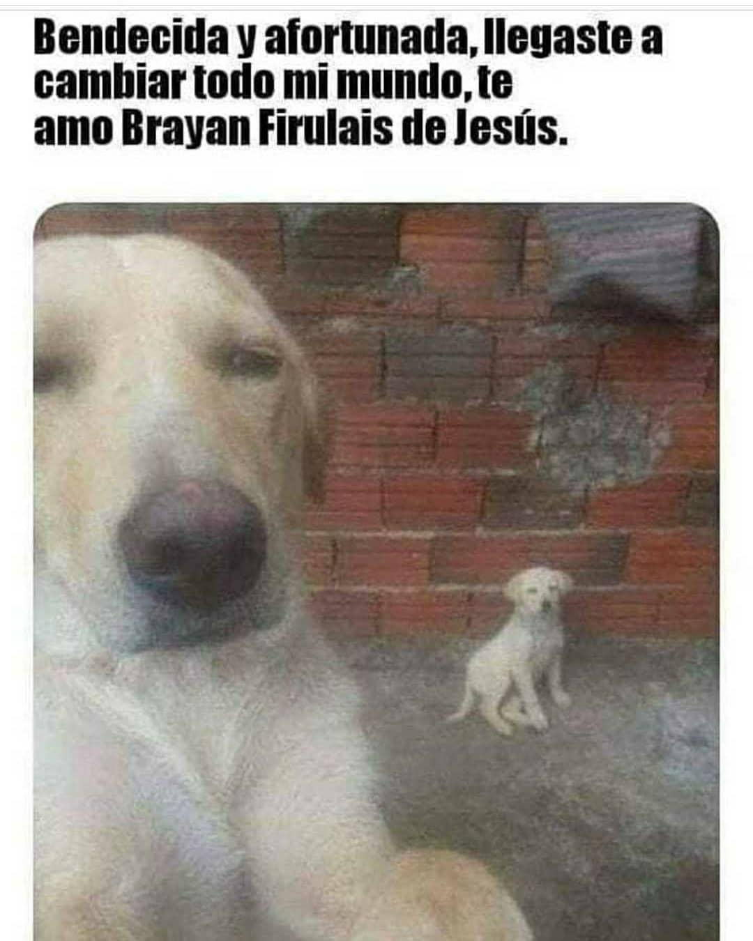 Bendecida y afortunada, llegaste a cambiar todo mi mundo, te amo Brayan Firulais de Jesús.