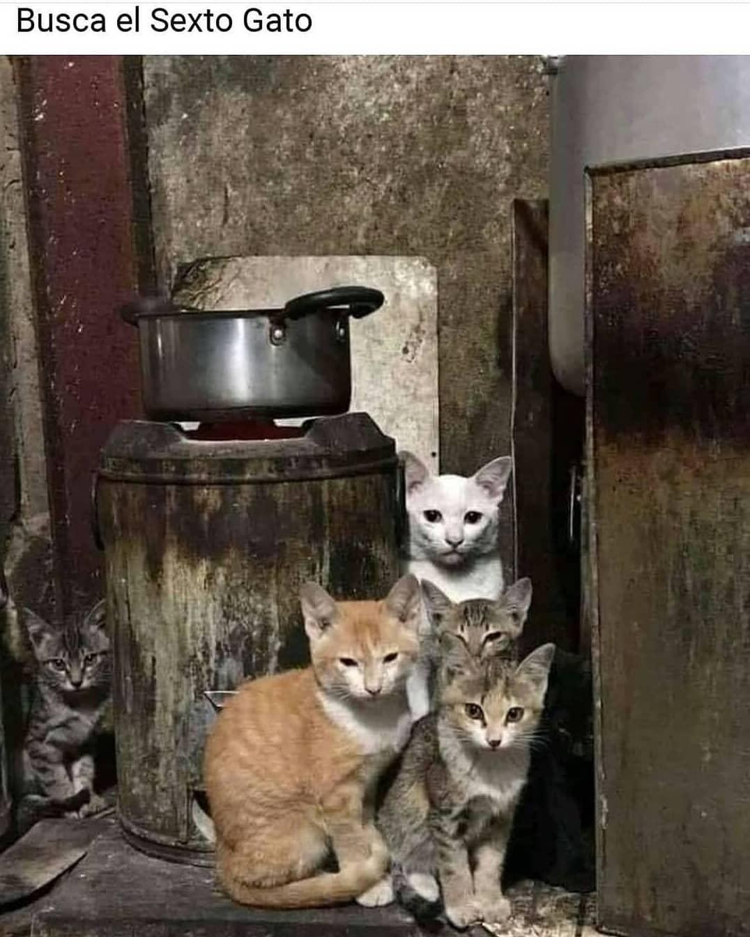 Busca el sexto gato.