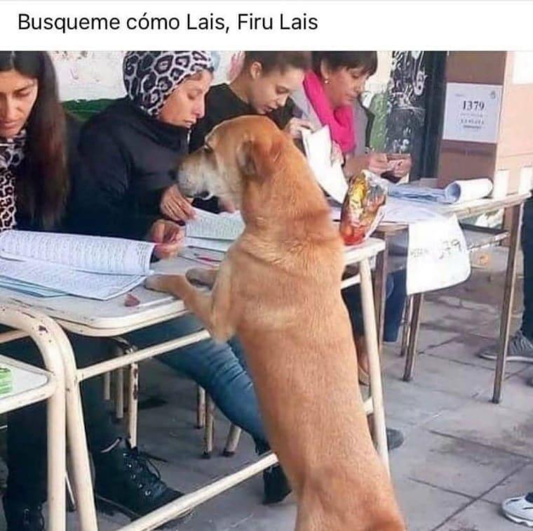 Busqueme como Lais, Firu Lais.