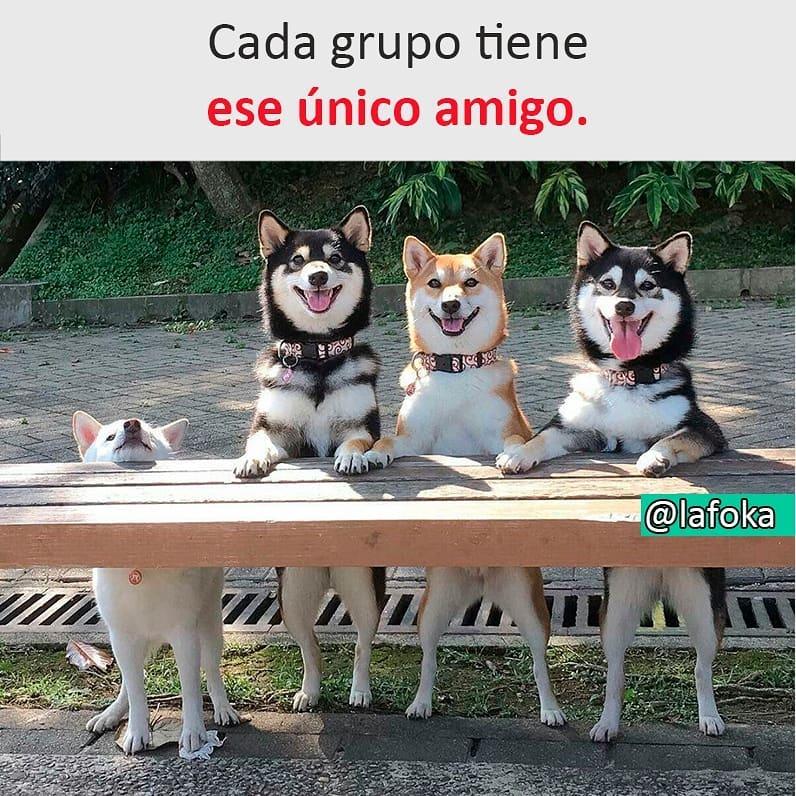 Cada grupo tiene ese único amigo.
