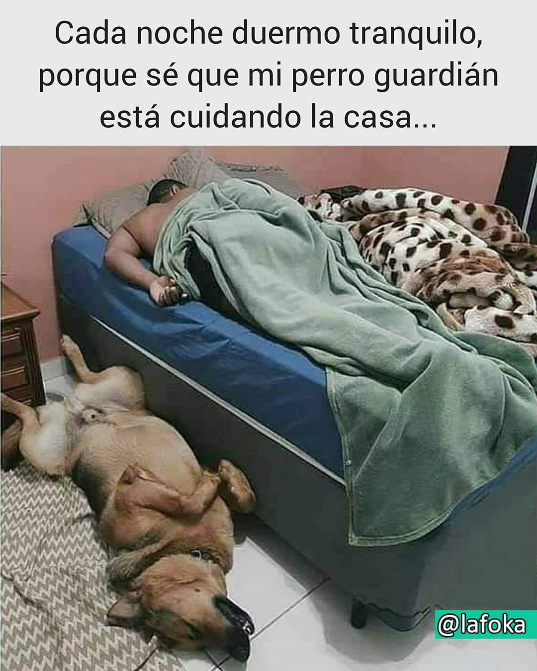 Cada noche duermo tranquilo, porque sé que mi perro guardián está cuidando la casa...