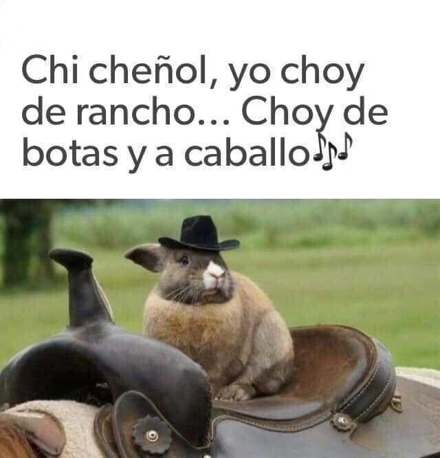 Chi cheñol, yo choy de rancho... Choy de botas y a caballo.