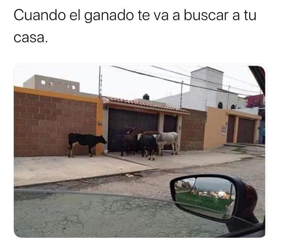 Como cuando el ganado te va a buscar a tu casa.