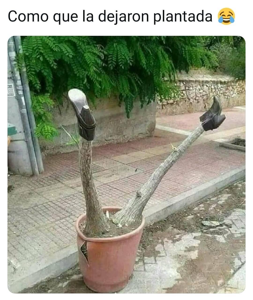 Como que la dejaron plantada.