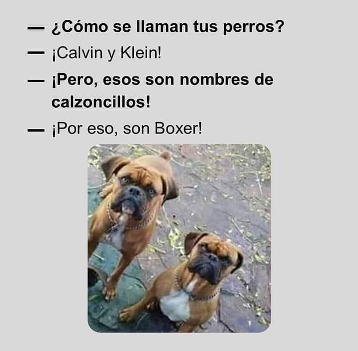 - Cómo se llaman tus perros?  - ¡Calvin y Klein!  - ¡Pero, esos no son nombres de calzoncillos!  - ¡Por eso, son Boxer!