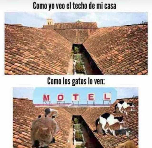 Como yo veo el techo de mi casa. // Como los gatos lo ven: Motel.