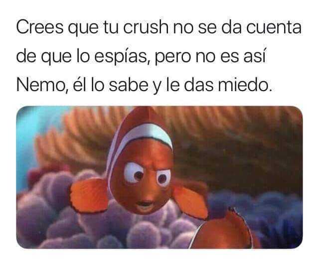 Crees que tu crush no se da cuenta de que lo espías, pero no es así Nemo, él lo sabe y le das miedo.