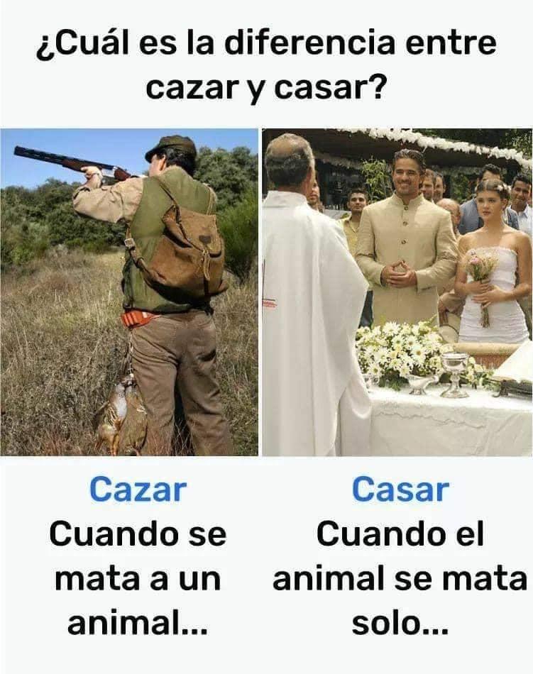 ¿Cuál es la diferencia entre cazar y casar?  - Cazar: cuando se mata a un animal...  - Casar: cuando el animal se mata solo...
