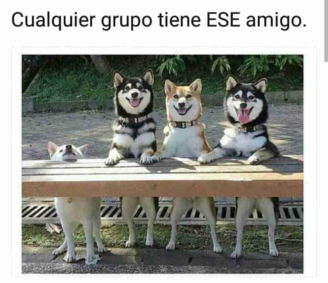 Cualquier grupo tiene ese amigo.