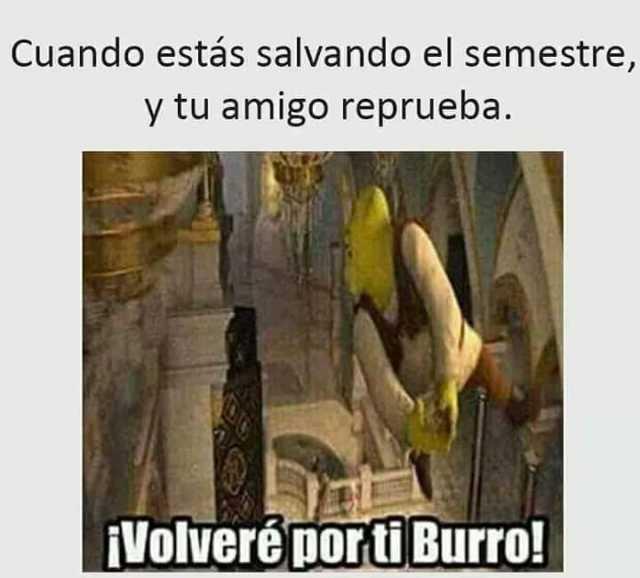 Cuando estás salvando el semestre, y tu amigo reprueba.  ¡VoIveré por ti Burro!