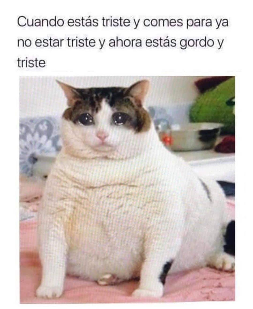 Cuando estás triste y comes para ya no estar triste y ahora estás gordo y triste.
