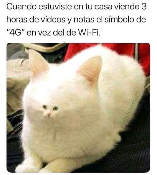 """Cuando estuviste en tu casa viendo 3 horas de vídeos y notas el símbolo de """"4C"""" en vez del de Wi-Fi."""