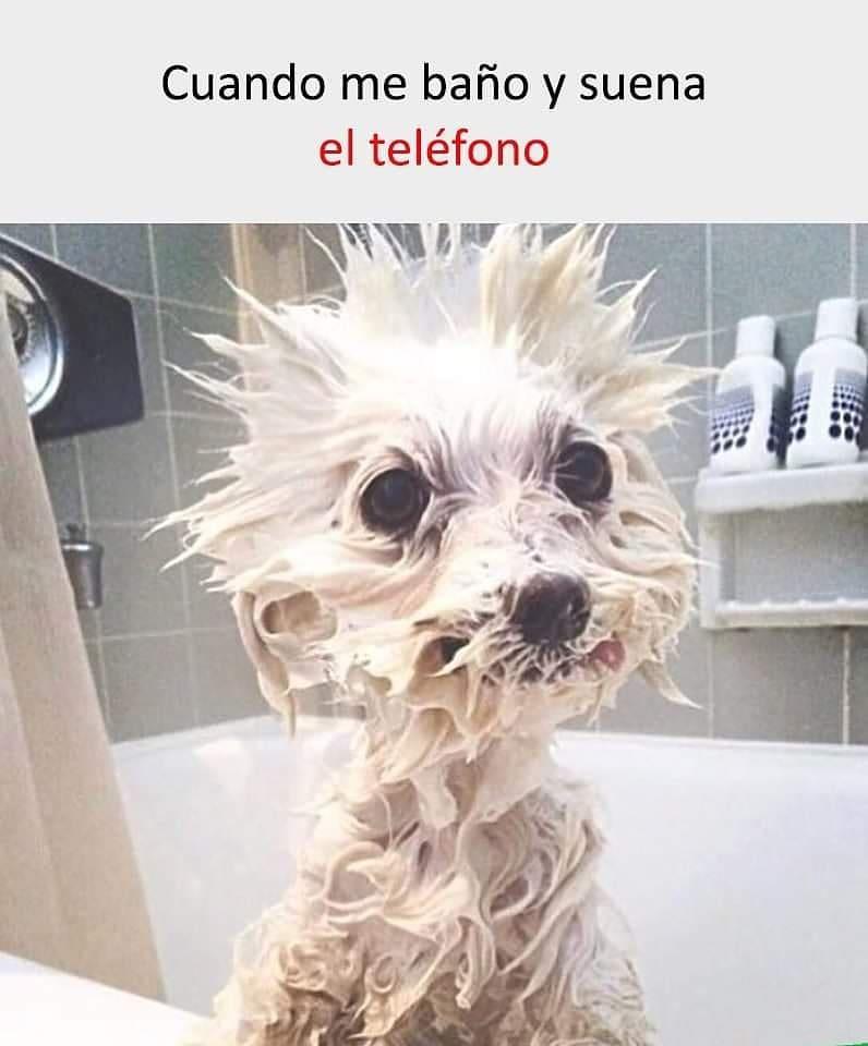 Cuando me baño y suena el teléfono.