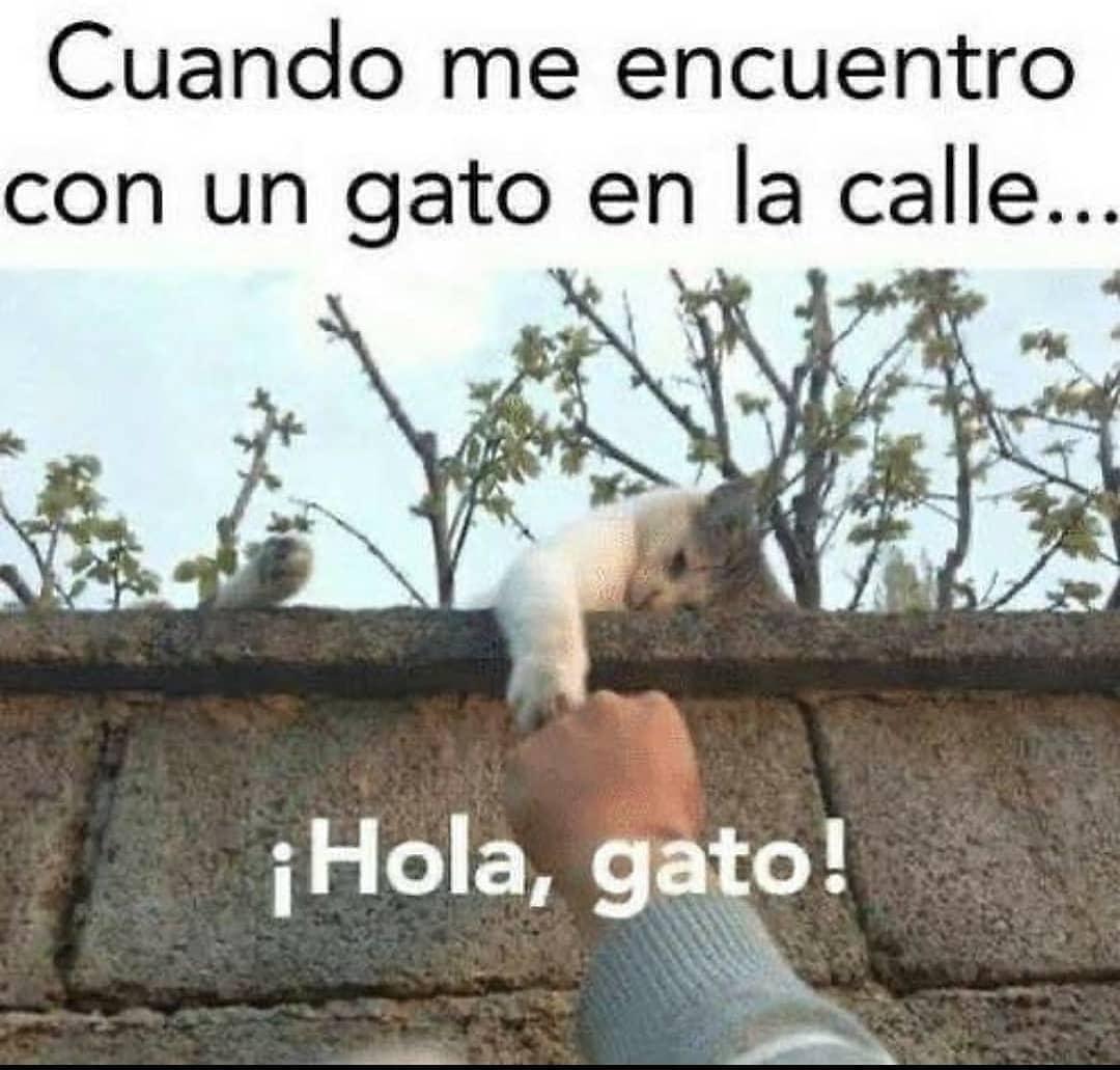 Cuando me encuentro con un gato en la calle...  ¡Hola, gato!