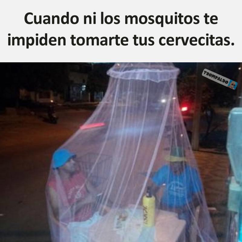 Cuando ni los mosquitos te impiden tomarte tus cervecitas.