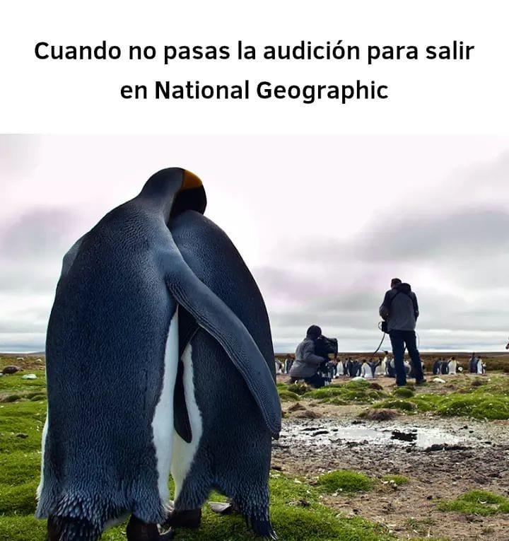 Cuando no pasas la audición para salir en National Geographic.