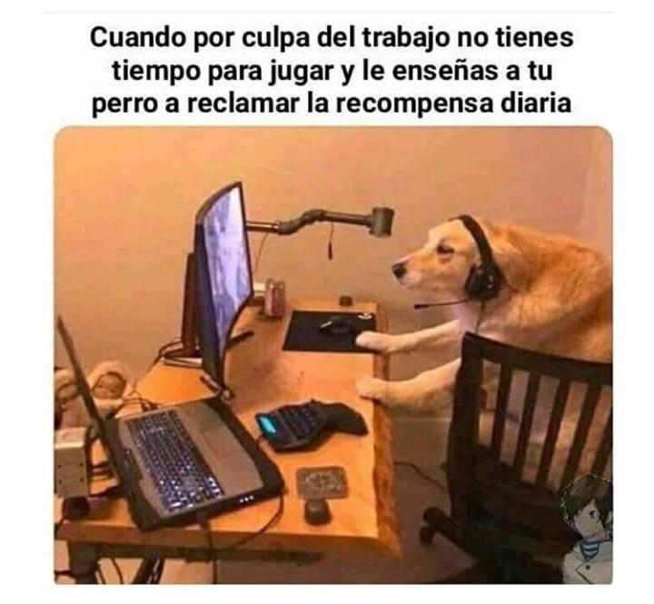 Cuando por culpa del trabajo no tienes tiempo para jugar y le enseñas a tu perro a reclamar la recompensa diaria.