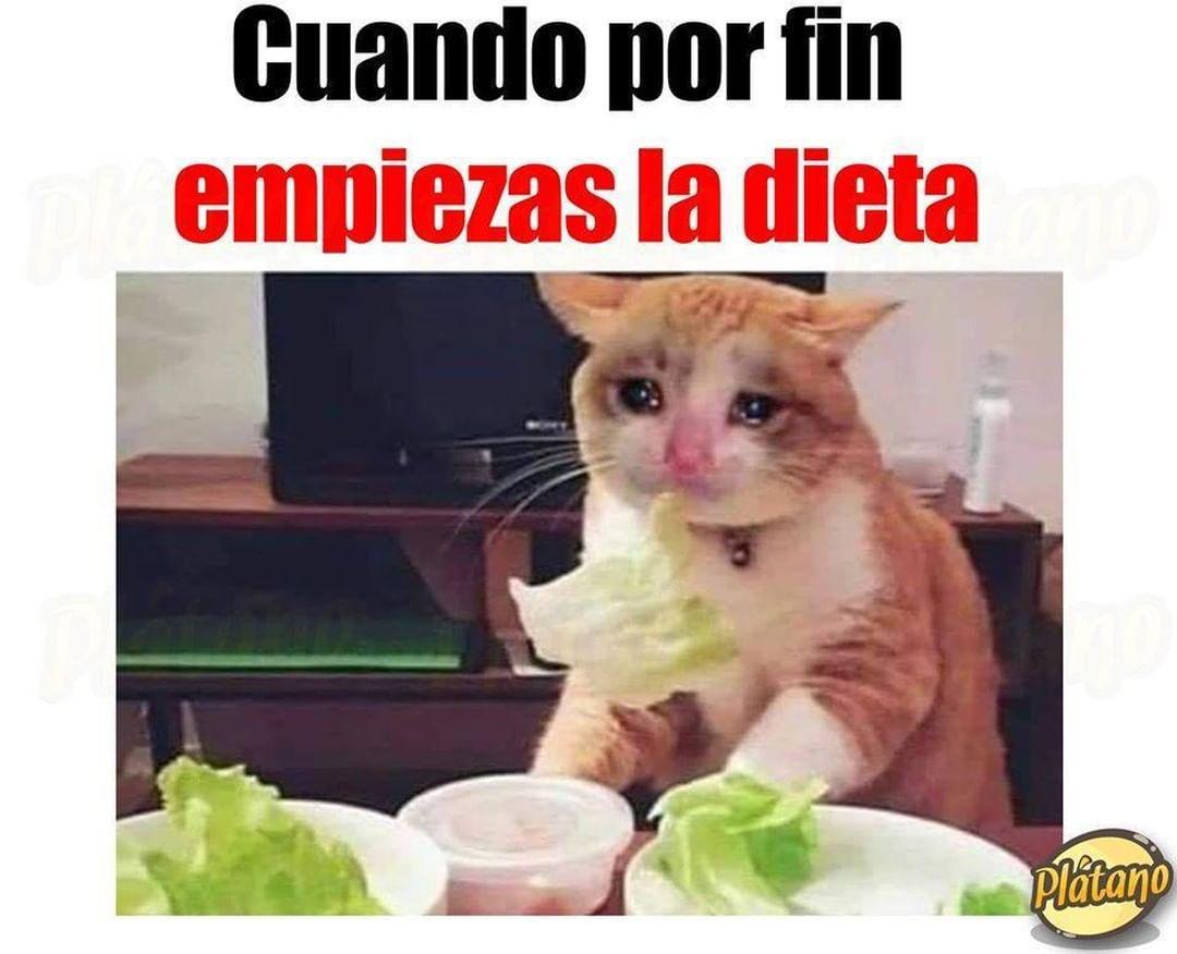Cuando por fin empiezas la dieta.