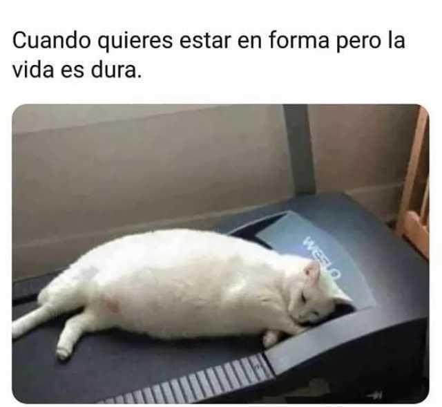 Cuando quieres estar en forma pero la vida es dura.