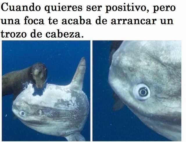Cuando quieres ser positivo, pero una foca te acaba de arrancar un trozo de cabeza.
