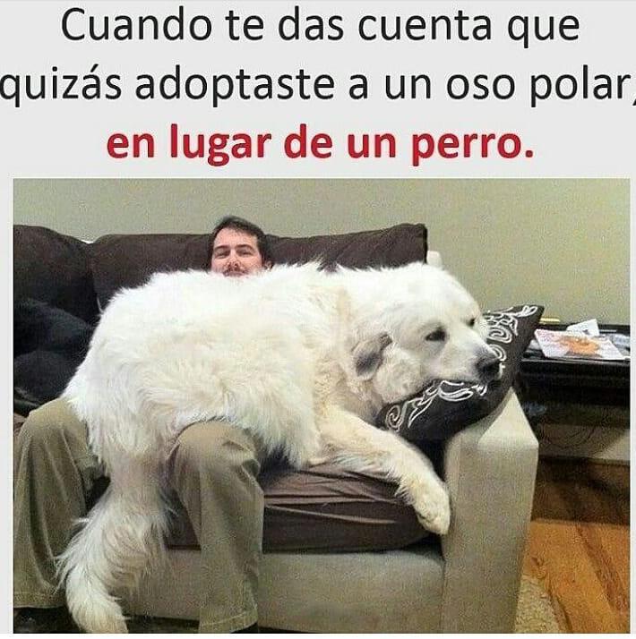 Cuando te das cuenta que quizás adoptaste a un oso polar, en lugar de un perro.