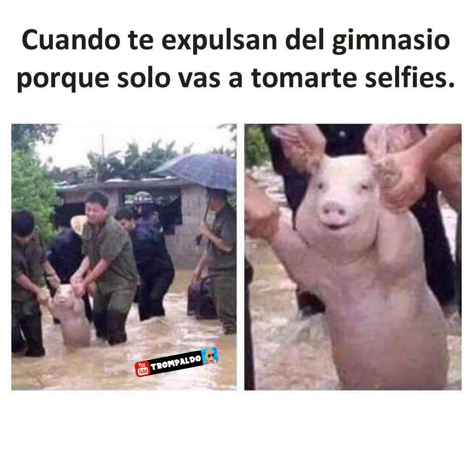 Cuando te expulsan del gimnasio porque solo vas a tomarte selfies.