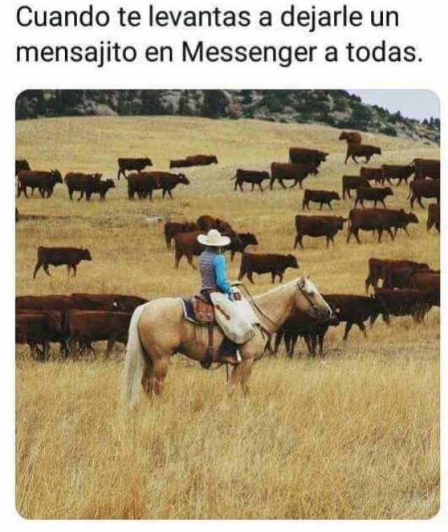 Cuando te levantas a dejarle un mensajito en Messenger a todas.