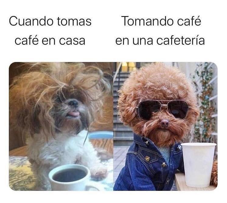 Cuando tomas café en casa.  / Tomando café en una cafetería.