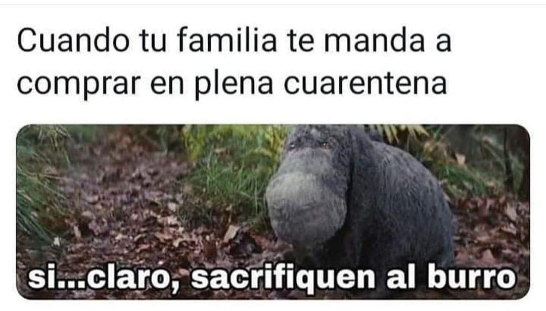 Cuando tu familia te manda a comprar en plena cuarentena.  Si... claro, sacrifique al burro.