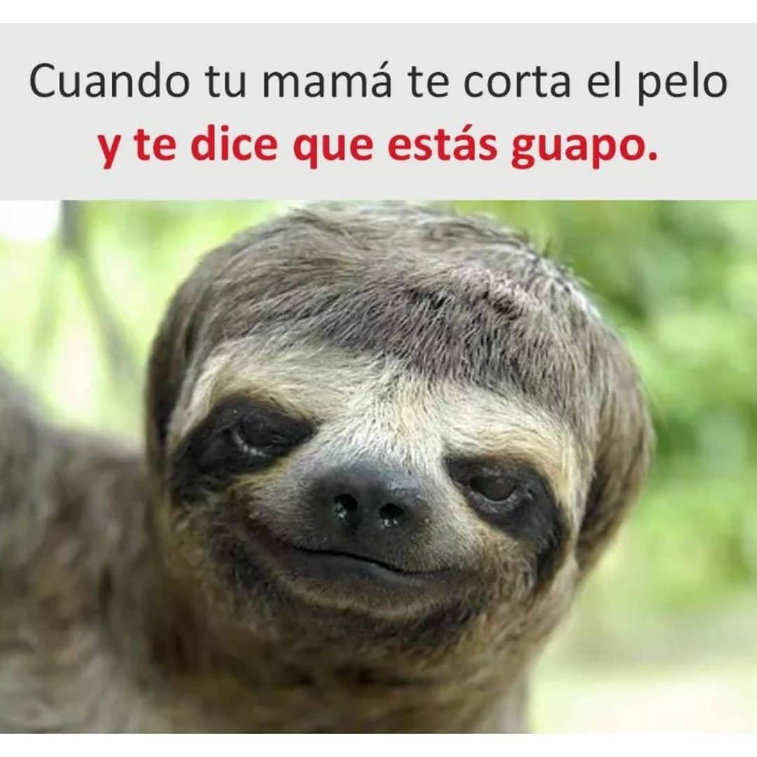 Cuando tu mamá te corta el pelo y te dice que estás guapo.