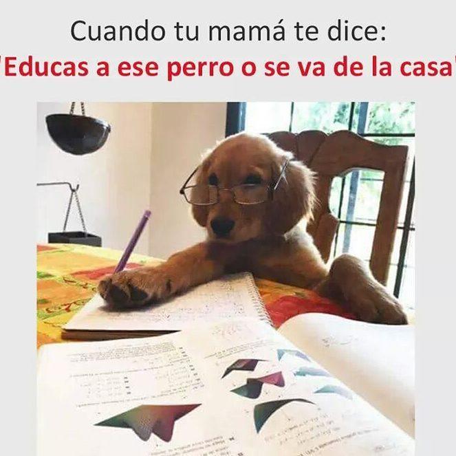 """Cuando tu mamá te dice: """"Educas a ese perro o se va de la casa""""."""