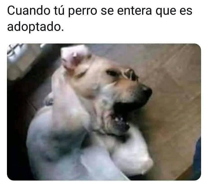 Cuando tu perro se entera que es adoptado.