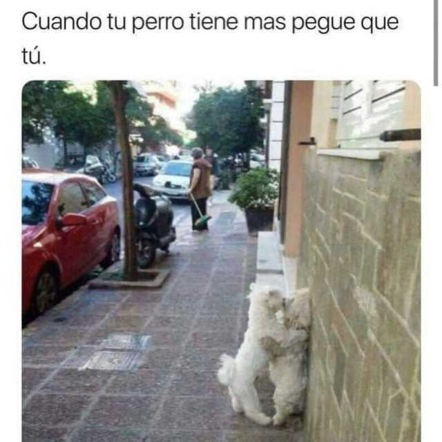 Cuando tu perro tiene mas pegue que tú.